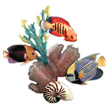 Bovano W1622 Emperor Angelfish Flame Angelfish Rock Beauty Fire Coral Sea Fans and Nautilus Wall Art